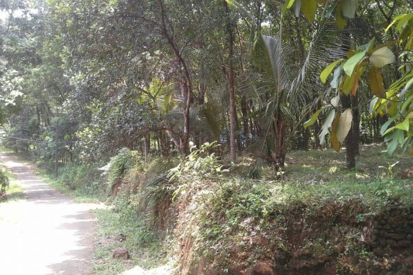 Rubber Estate/1.5 acre fertile land at Thodupuzha